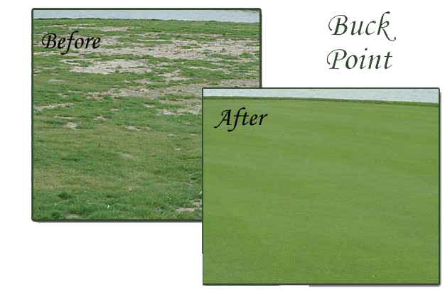 Before and After using Progressive Turf